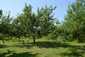 Mixed orchards in the Urdenbacher Kämpe, © Kreis Mettmann/Y. Hutchins